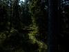 Shadows of Drakwald #01