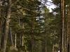 Road through Drakwald