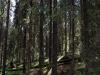 forest12.jpg